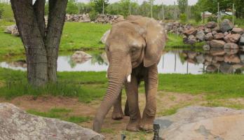 Big Bear and Squeak - E20 - Elephant