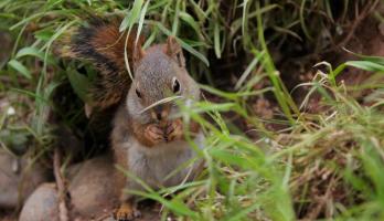 Big Bear and Squeak - E21 - Squirrel