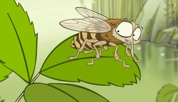 I'm a Creepy Crawly - E145 - Horsefly