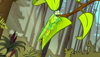 I'm a Creepy Crawly - E120 - Praying Mantis