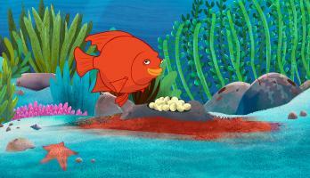 I'm a Fish - E38 - I'm a Garibaldi Fish