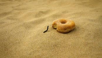 Minuscule - S3E16 - The Doughnut