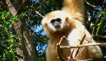 Big Bear and Squeak - E41 - Gibbon