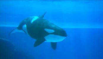 Big Bear and Squeak - E31 - Orca