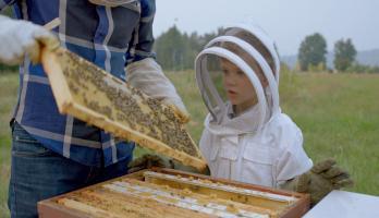 I Love - E6 - Beekeeping