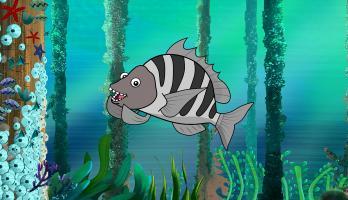 I'm a Fish - E37 - I'm a Sheepshead Fish