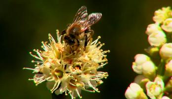 Big Bear and Squeak - E26 - Honey Bee