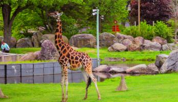 Big Bear and Squeak - E30 - Giraffe