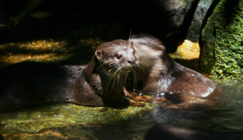 Big Bear and Squeak - E36 - Otter