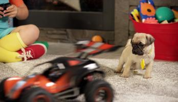 Cutie Pugs - E10 - The Toy Car