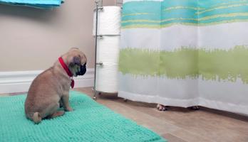 Cutie Pugs - E19 - Hide and Seek