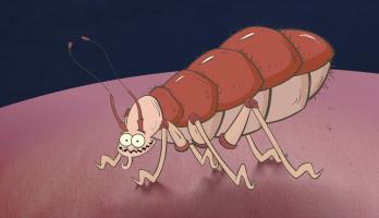 I'm a Creepy Crawly - E123 - Bed Bug