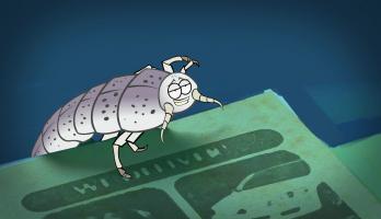 I'm a Creepy Crawly - E135 - Silverfish