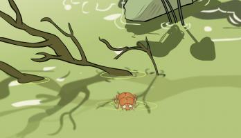 I'm a Creepy Crawly - E148 - Water Beetle