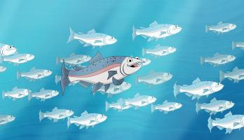 I'm a Fish - E22 - I'm a Salmon
