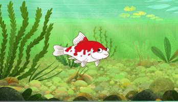 I'm a Fish - E44 - I'm a Koi Fish