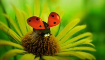 Minuscule - S1E1 - The Ladybug