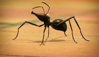 Minuscule - S1E2 - Ants