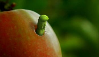 Minuscule - S1E36 - The Apple of Concord