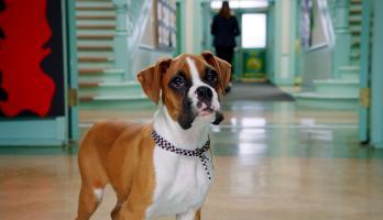 Pup Academy - E16 - Spark Wants Back