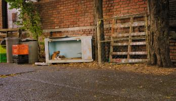Pup Academy - E17 - The Day of the Stray
