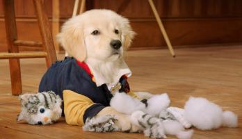 Pup Academy - E9 - Kitten Academy
