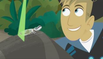 Wild Kratts - S2E7 - Bugs or Monkeys