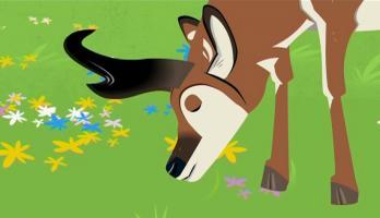 Wild Kratts - S3E12 - The Amazing Creature Race